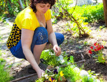 Gardening - mature woman planting flowers Stock Photos