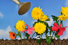 Gardening one. Planting flowers in the garden Stock Images