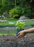 Gardening. In park Stock Image