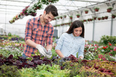 Gardening people, Florist working with flowers in greenhouse Royalty Free Stock Photo