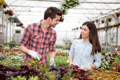 Gardening people, Florist working with flowers in greenhouse Royalty Free Stock Photography