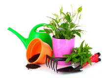 Gardening and plant isolated on a white Royalty Free Stock Image