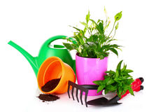Gardening and plant isolated on a white Royalty Free Stock Photo
