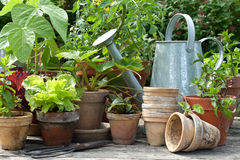 Gardening royalty free stock images
