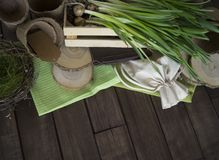 Potted daffodils with bulbs for spring planting. Gardening and planting concept. Planting hyacinth in ceramic pot. Seedlings garden tools, tubers bulbs gladiolus Stock Image