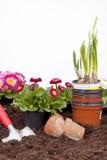 Gardening- planting flowers