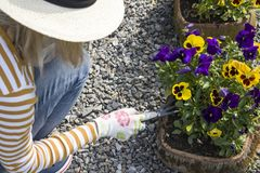 Gardening and planting flowers in the backyard. stock photography