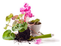 Gardening, planting flowers Royalty Free Stock Photo