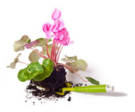 Gardening, planting flowers Royalty Free Stock Images