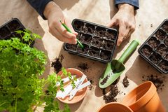Gardening, planting at home. man sowing seeds in germination box Stock Images
