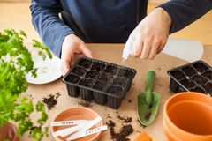 Gardening, planting at home. man sowing seeds in germination box royalty free stock photos