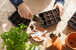 Gardening, planting at home. man sowing seeds in germination box Royalty Free Stock Photography