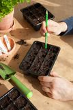 Gardening, planting at home. man sowing seeds in germination box Stock Image