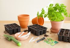 Gardening, planting at home. sowing seeds in germination box Royalty Free Stock Images