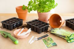 Gardening, planting at home. sowing seeds in germination box Stock Photos