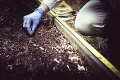 Gardening and planting at start of season 3. royalty free stock image