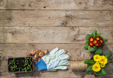 Gardening plants, seedlings, corms and tools. Gardening concept plants, seedlings, corms, corms and tools on vintage wooden background, cottage lifestyle Royalty Free Stock Photo