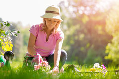 Gardening. Portrait of mature woman gardening at home stock images