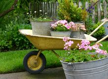 Gardening pots. Display of container gardening with tin pots and old yellow wheelbarrow; charming royalty free stock image
