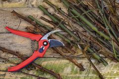 Gardening - Pruning Roses with Secateurs Royalty Free Stock Images