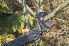 Gardening - pruning tree Stock Photo