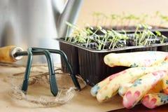 Gardening rake and green seedlings Stock Photography
