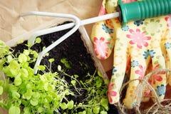 Gardening rake and seedlings for transplantation Royalty Free Stock Photo