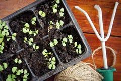 Gardening rake with seedlings for transplantation Stock Photo