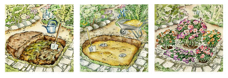 Gardening of rose bushes. Hand painted watercolor illustration represents step-by-step preparation of pit for planting roses Royalty Free Stock Photography