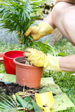 Gardening with rubber yellow gloves Stock Photo
