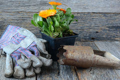 Gardening Scene with gloves and flower Royalty Free Stock Images