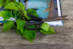 Gardening scissors, book and green branch on rustic background. Gardening time.