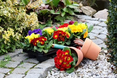 Gardening season. Spring in the garden with flowers in pots Stock Image