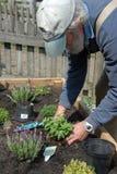 Gardening Senior Stock Photography
