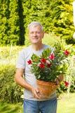 Gardening senior man Stock Photography