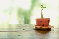 Green plant in a pot stock images
