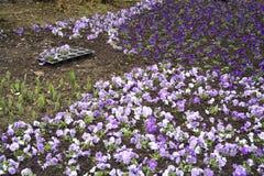 Gardening in spring 4 Stock Image