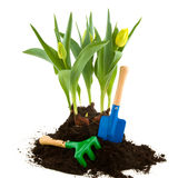 Gardening in spring Stock Images