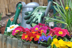Gardening on spring Stock Photography