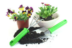 Gardening with spring flowers Royalty Free Stock Images