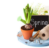 Gardening. Royalty Free Stock Photos