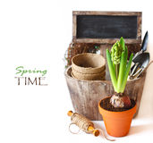 Gardening. Spring time. Beautiful spring flowers and gardening tools on a white background stock image