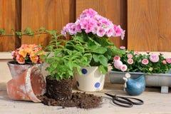 Gardening in springtime Stock Photo
