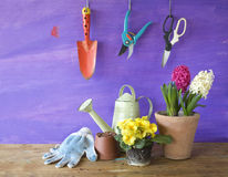 Gardening in the springtime, Royalty Free Stock Image