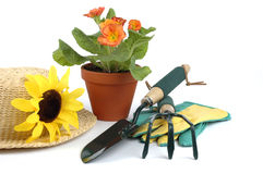 Gardening Still Life. Still life consisting of a had, flowers and garden tools Stock Images