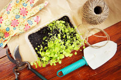 Gardening still life with garden tools and seedlings Royalty Free Stock Photos