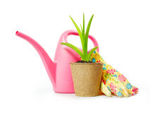 Gardening still life with green plant in the peat pot and garden tools Stock Photos