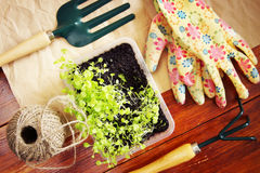 Gardening still life with green seedlings and tools Stock Photography