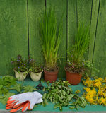 Gardening still life with plants in pots and gloves Royalty Free Stock Photography