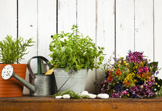 Gardening still-life with potted herbs and dried flowers Stock Photos
